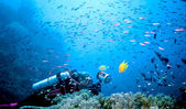 Beqa Fish storm — Stock Photo