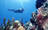 Pristine Reef — Stock Photo
