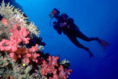 Diver and soft coral wall — Stock Photo