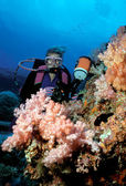 Diver and Soft Corals — Stock Photo