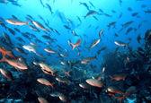 Галапагосские острова рыбы — Стоковое фото