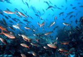 Galapagos fisk — Stockfoto