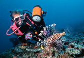 Female diver and lionfish — Zdjęcie stockowe