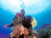 Kadın scuba diver ve fauna — Stok fotoğraf