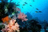 Maldive Shallow Reef — Stock Photo