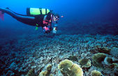 Female Diver and Indo corals — Stock Photo