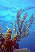 Caribe shallow reef — Stock Photo