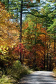 Autumn backroad — Stock Photo