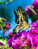 Springtime Butterfly — Stock Photo