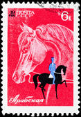 Postal stamp. The rider on a horse, 1968 — Stock Photo