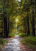 Carretera. senda otoñal. un sendero de madera. hojas de otoño — Foto de Stock