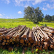 Pile of trunks — Stock Photo