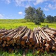 Pile of trunks — Stock Photo #5873712