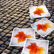 Fallen Autumn  prints - Stock Photo