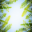 Stock Photo: Foliage Frame