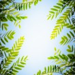 Foliage Frame — Stock Photo