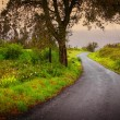 Stock Photo: Road on Woods