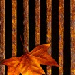 Leaf in drain - Stockfoto