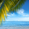 Tropical Beach — Stock Photo #5873922