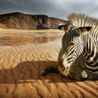 Beach Zebra — Stock Photo