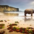 Beach Rhino — Stock Photo #5873994