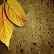 Yellow Fall Leafs - Stock Photo