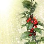 ramo de azevinho — Foto Stock