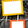 Paper Frames — Stock Photo