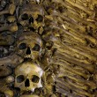 Bones and Skulls — Stock Photo