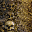 Stock Photo: Bones and Skulls