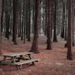 Forest Table — Stock Photo