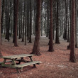Stock Photo: Forest Table