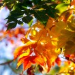 Fall background — Stock Photo #5874487