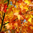 Fall Colors - Stockfoto