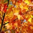 Fall Colors — Photo
