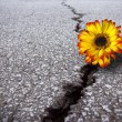 Flower in asphalt - Stock Photo