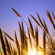 Spikes in Sunset — Stock Photo