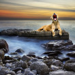 Surreal lioness - Foto Stock