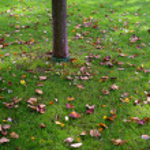Fall leafs — Stock Photo #5874810