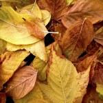 Autumn leaves — Stock Photo #5874812