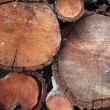 Stock Photo: Firewood Trunks
