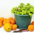 Stock Photo: Oranges and Vase