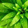 Wet Foliage - Stock Photo