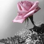 růžové okvětní lístky — Stock fotografie #5875196