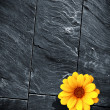 Black Schist Flower - Stock Photo