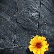 Black Schist Flower — Stock Photo
