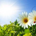 Spring Foliage — Stock Photo #5875219