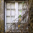 Branchy Window - Stock Photo