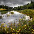 Flowery Lake — Stockfoto