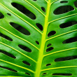 Monstera leaf — Stock Photo #5875287